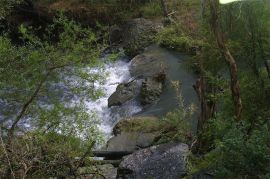 Flowing river with vegetation