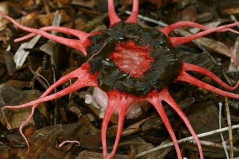 Body Snatcher fungus – Ian Moodie